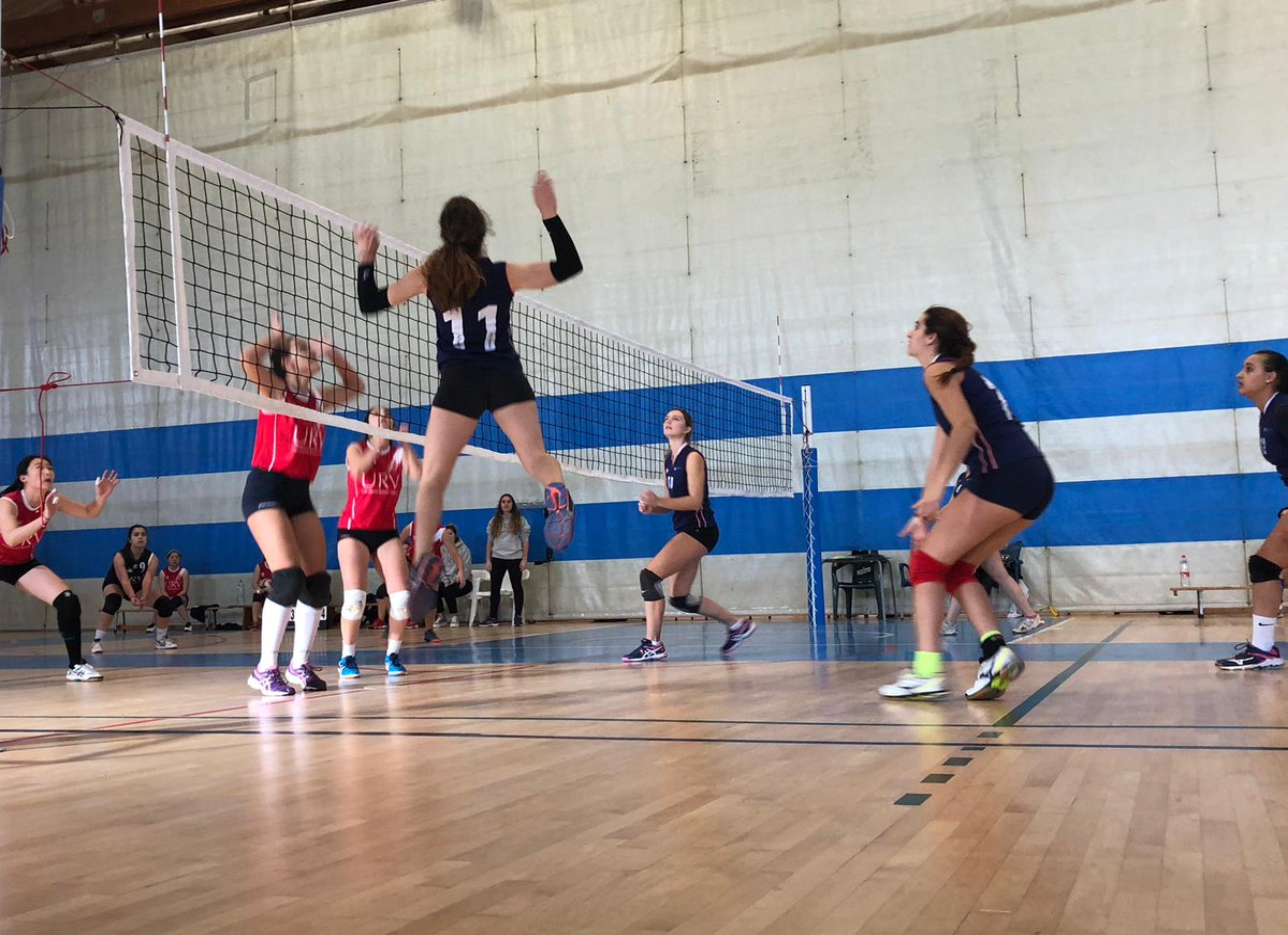 Voleibol femení