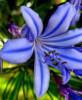 flor geny.jpg